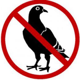 Anti-Pigeons Pins ecopic 2 NO (lästig zu verhindern Tauben und andere Vögel)